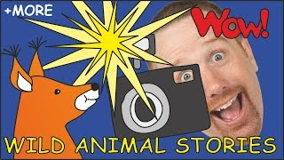 Wild Animal Stories for Kids | Magic Animals from Steve and Maggie | Story for Kids | Wow English TV