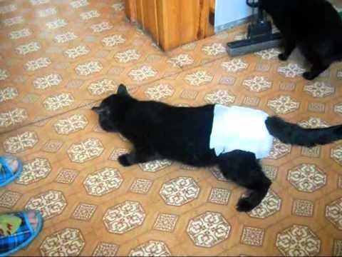 Как сделать так чтобы кот не снял памперс