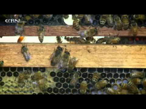 Unsolved Mystery: Vanishing Bees Stump Scientists - CBN.com