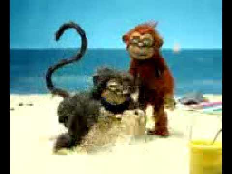 Affen Sex.3gp video