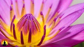 Muziek voor zenmeditatie, Ontspannende Meditatie Muziek, Zen, Binaurale Beats, ✿3283C