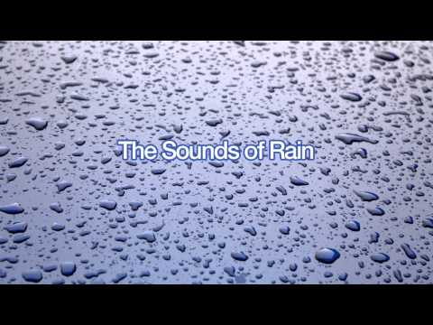 The Sounds of Windy Rain for Sleep (60 Minutes)