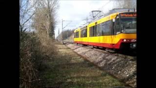 Bunte Sichtungen rund um Karlsruhe, April/Mai 2016
