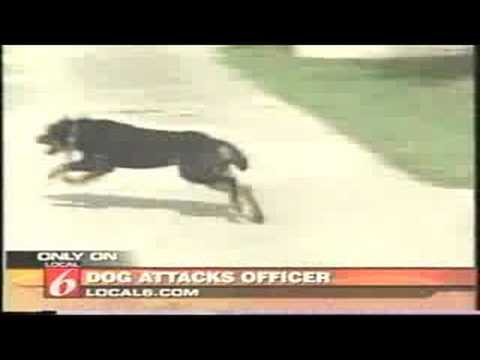 Dog attacks Police Officer Taser Full News Report Music Videos