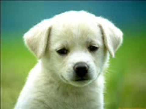 Perros de todas las razas los mas lindos sin duda - YouTube