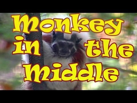 Monkey Songs for Children - Monkey in the Middle - Kids Songs by The Learning Station