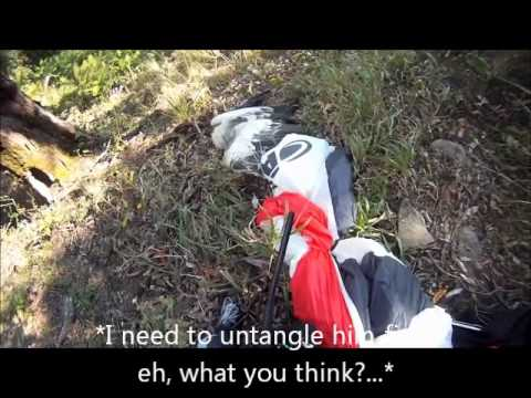 (Uncensored English Version)Paragliding vs Eagle / Extreme Paraglider Bird Strike Accident