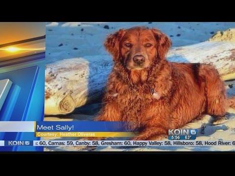 "Pet Walk Forecast - September 19, 2014 ""Sally"""