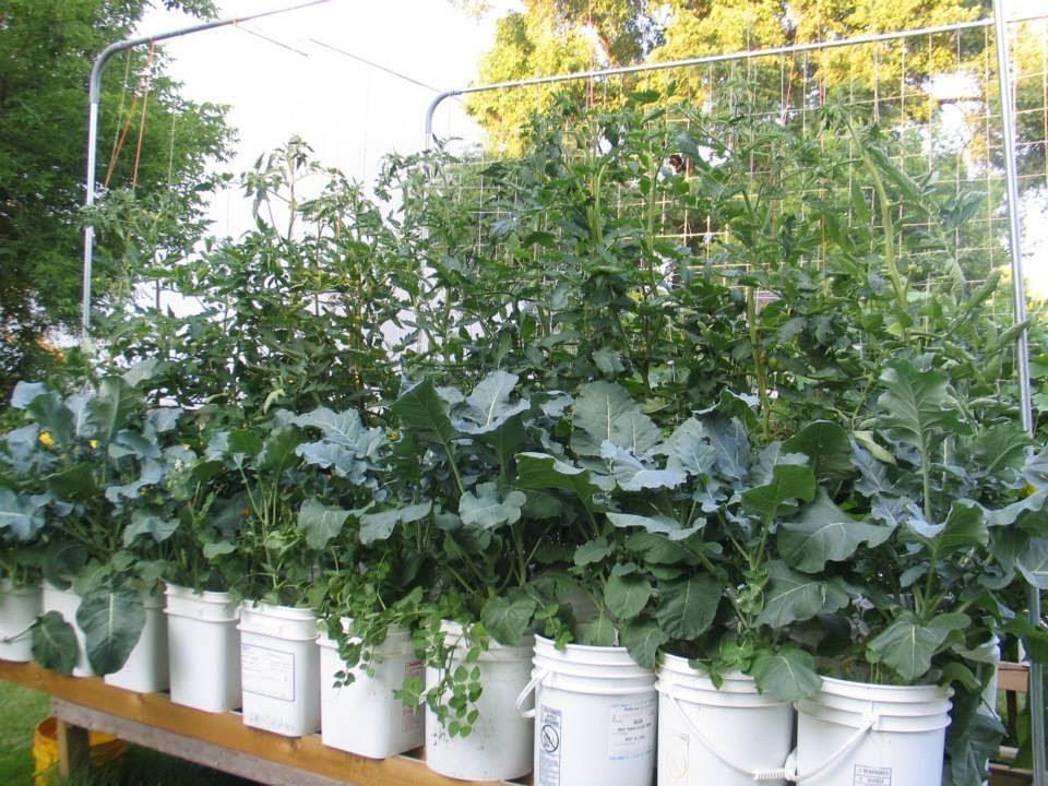 The Rain Gutter Grow System Meets Vermiculture A Crazy