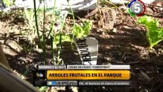 CANAL 5 ROSARIO - ROSARIO DIRECTO - ÁRBOLES FRUTALES EN EL PARQUE