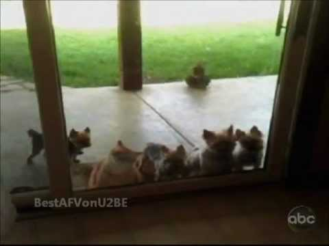  America's Funniest Home Videos Part 121 (Original Audio) re-upload of Part 36 (new clips added)