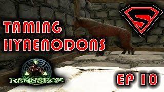 Ark Ragnarok: TAMING A PACK OF HYAENODONS & BREEDING! HOW TO TAME AND TAMING PEN! S1E10