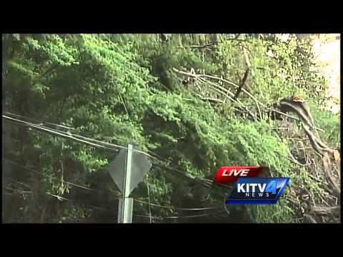 Fallen tree closes Diamond Head Road