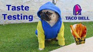 Shaq The Pug | Taco Bell Fries Taste Test