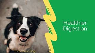 5 Benefits Of Feeding Your dog A Fresh Food Diet