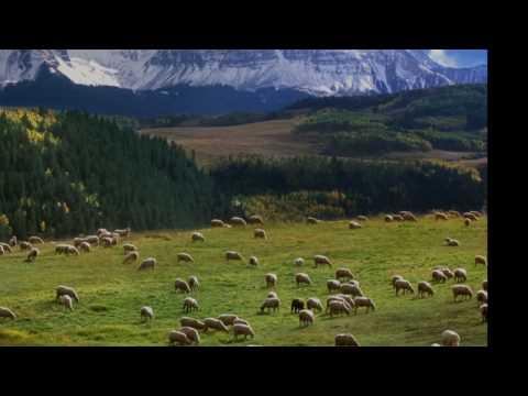 Бах Иоганн Себастьян - Bwv 208 Sheep May Safely Graze