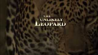 The Unlikely Leopard Conservation Message