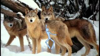 1 Mr. Bones dances with wolves