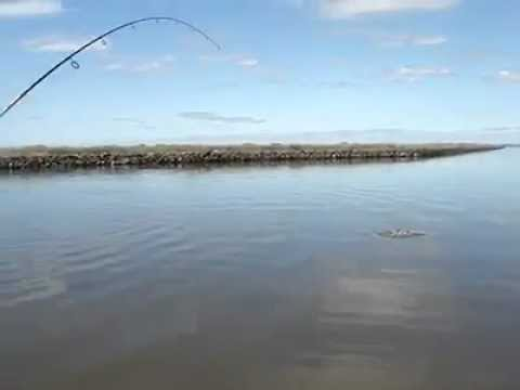 Saltwater Fishing in Southeast Louisiana - Redfish out of Lafitte (near New Orleans)