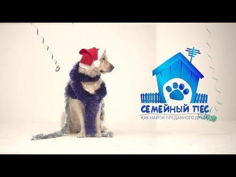 """СЕМЕЙНЫЙ ПЕС """"НОВОГОДНИЙ ВЫПУСК""""2012"""