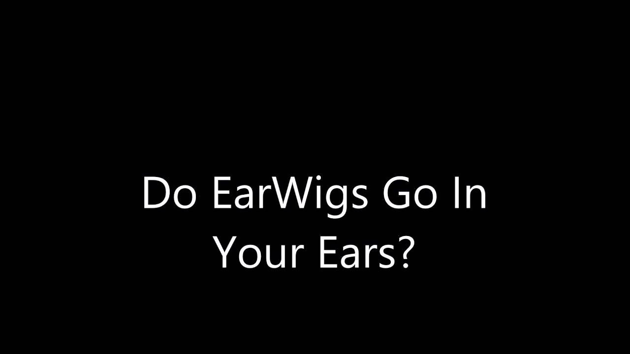 Earwig in ear