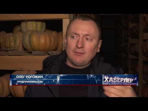 Необычные сорта тыквы, свёклы и моркови в Крыму. 16.01.17