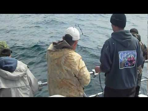Halibut Fishing Seward Alaska with Puffin Charters June 2012 big fish #1 video
