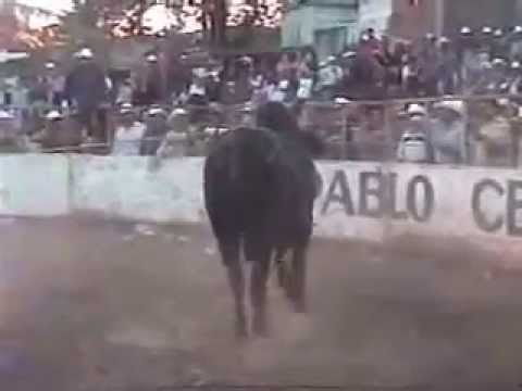 EL TORO SUABESITO Video