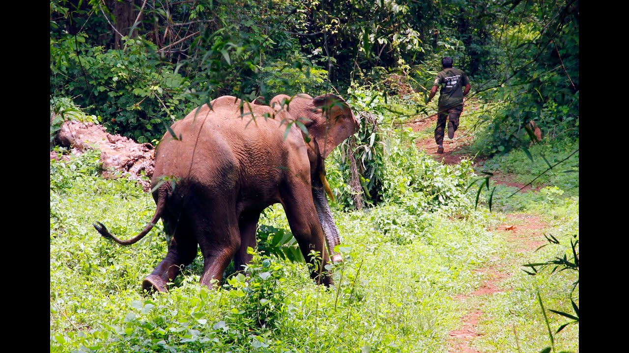 Elephant attack in kerala forest - photo#1