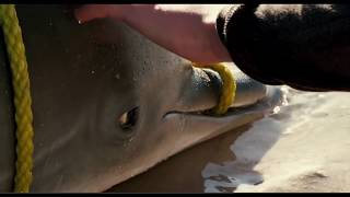 Dolphin Tale 2 at St Pete Beach