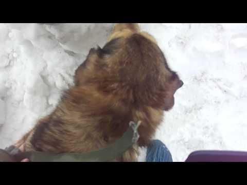 Приют  Ржевка (СПб) Прогулка  с собаками (позитив!=)