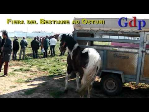 Ostuni 18 marzo 2012: Fiera del bestiame al Foro Boario
