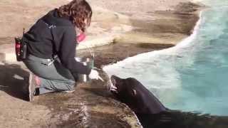 Silent Knight: The Rescue of a California Sea Lion