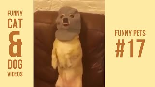 Funny Cats and Dogs Compilations 17 | Vines 2018