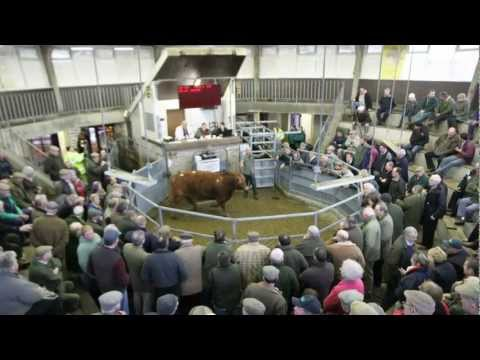 Cattle Market Derby