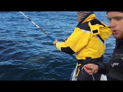 видео ловля палтуса