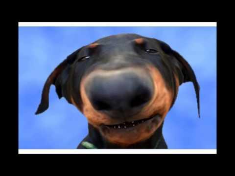 Happy Birthday!!! - Funny Birthday Songs (Cute Puppy Edition)