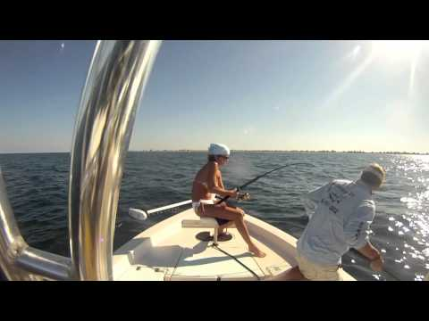 Daytona Beach Fishing for cobia by Nsbcharters