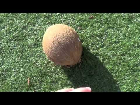 Как расколоть кокос / How To Crack Open a Coconut