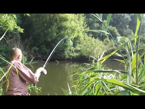 Ловля сазана по быстрому. Рыбалка донкой на реке.