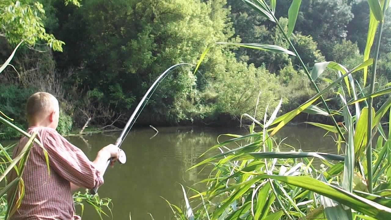 видео о рыбалке на реке сазан
