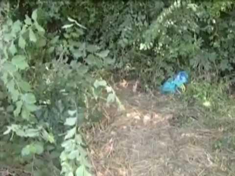 Omicidio di Spello: forse indagato il marito per omicidio volontario