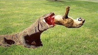 [the animal world] Gorilla vs Bear, Lion, Big Baboon, Hyena Most Amazing Wild Animal Attacks  #9