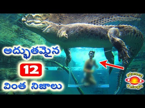 Top 12 Unbelievable Facts That You Never Know | Top Most Amazing Facts by Planet Telugu