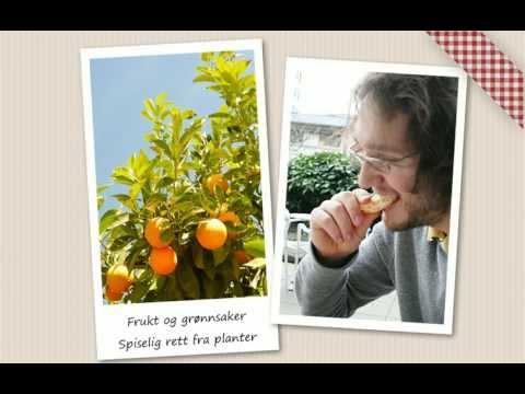 Frukt og gr