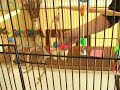 Caring for Parakeets : Cage Accessories for Parakeets