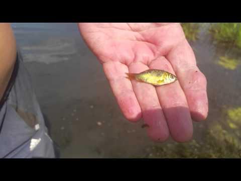 ловля голавля на реке сосна