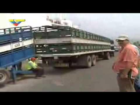 3 mil 100 búfalas y 1 mil 600 vacas Gyrolando arribaron desde el Brasil