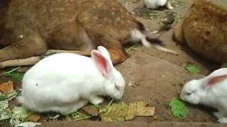 Thế giới động vật - thỏ bạch