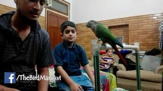 How to Get Rid of Parrot Biting - Urdu/Hind - Training with Sparky - TheBirdMan